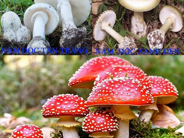 Phân biệt nấm độc và cách phòng chống